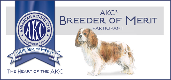 Cavalier King Charles Breeder of Merit