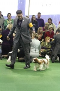 AKC GCH Quail Garden Tad O' Magic WMKC Show 4