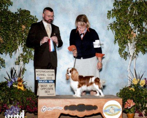 GCH Lilium Sweet Bay Laurel Show Win