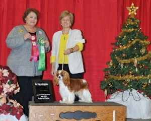 CKCSC USA CH & AKC GCH Royalmark Crystal Blue Persuasion at Wyn Dancer Show Win 6